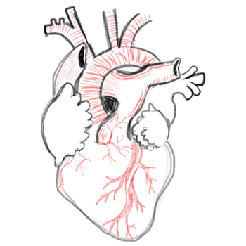 clipart library library A blank heart number. Anatomical drawing bad