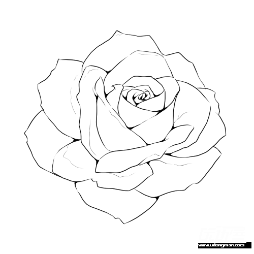 graphic Rose line drawing template