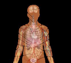 transparent library transparent body anatomical #105259679