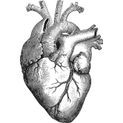 graphic black and white download Anatomical Heart by Martmel