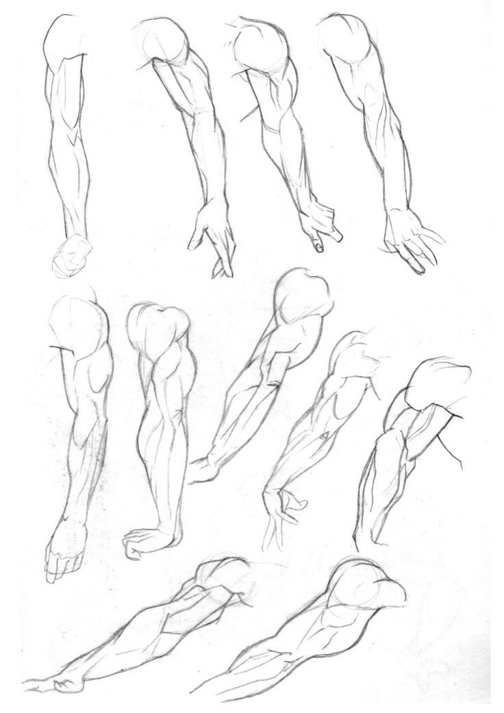 jpg transparent stock Drawing ref muscle. Human figure reference art