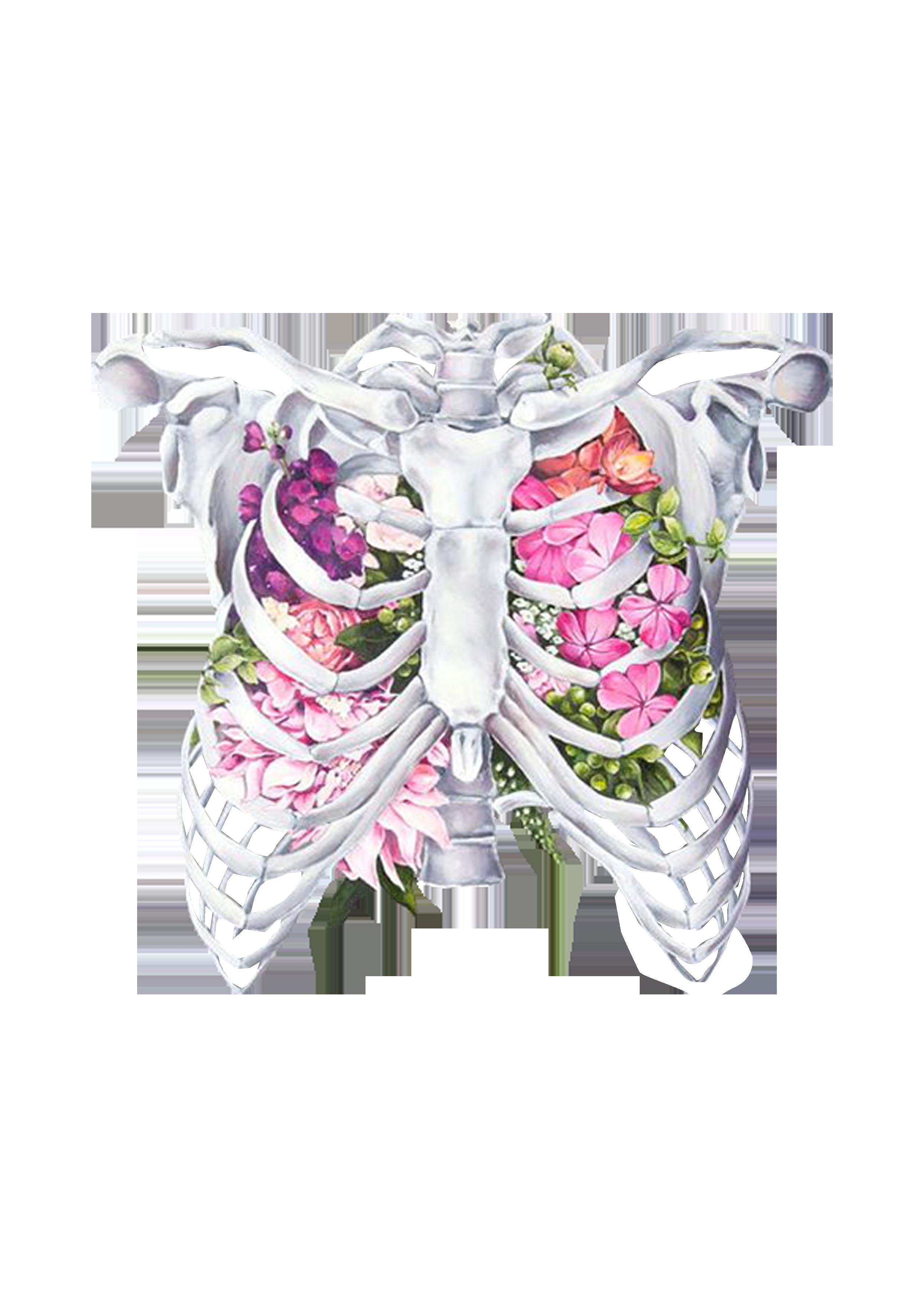 vector stock Anatomy rib human body. Cage drawing flower