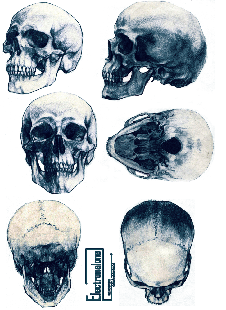 jpg freeuse Renders cranes humain skull squelette differents angles dessin