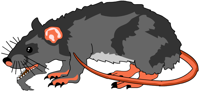 clip art transparent library Smelly Rat