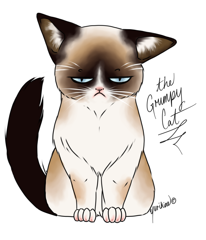 graphic transparent stock Grumpy Cat Drawing at GetDrawings