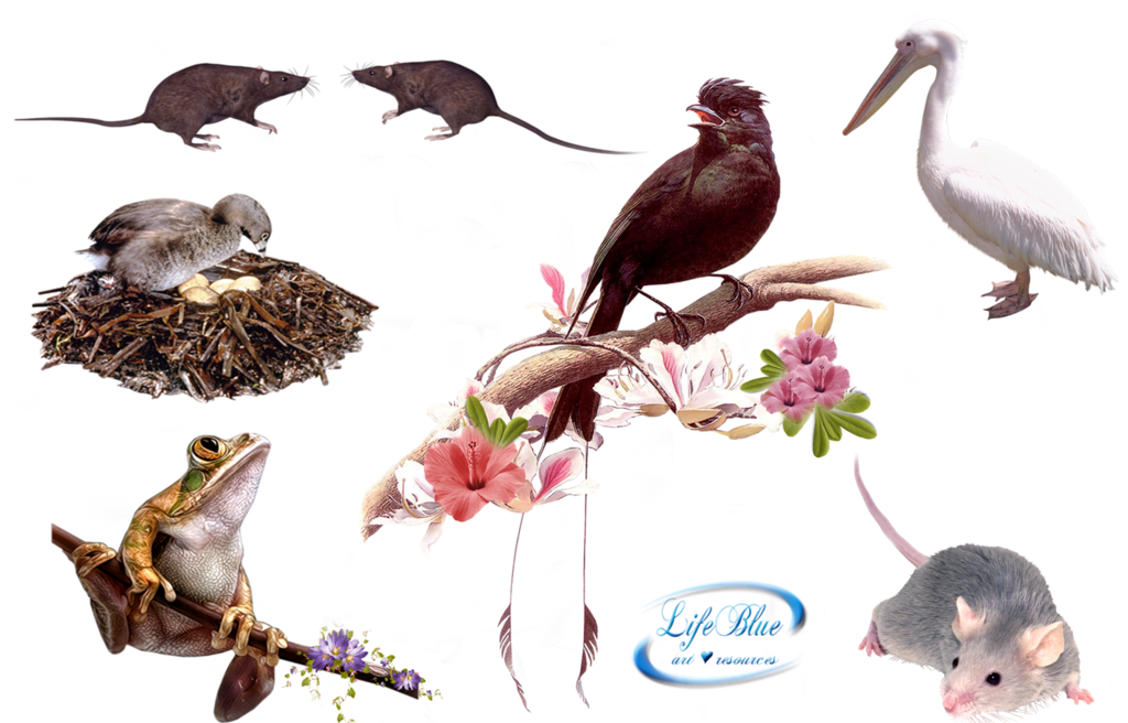image royalty free download Png by lifeblue on. Animal kingdom clipart