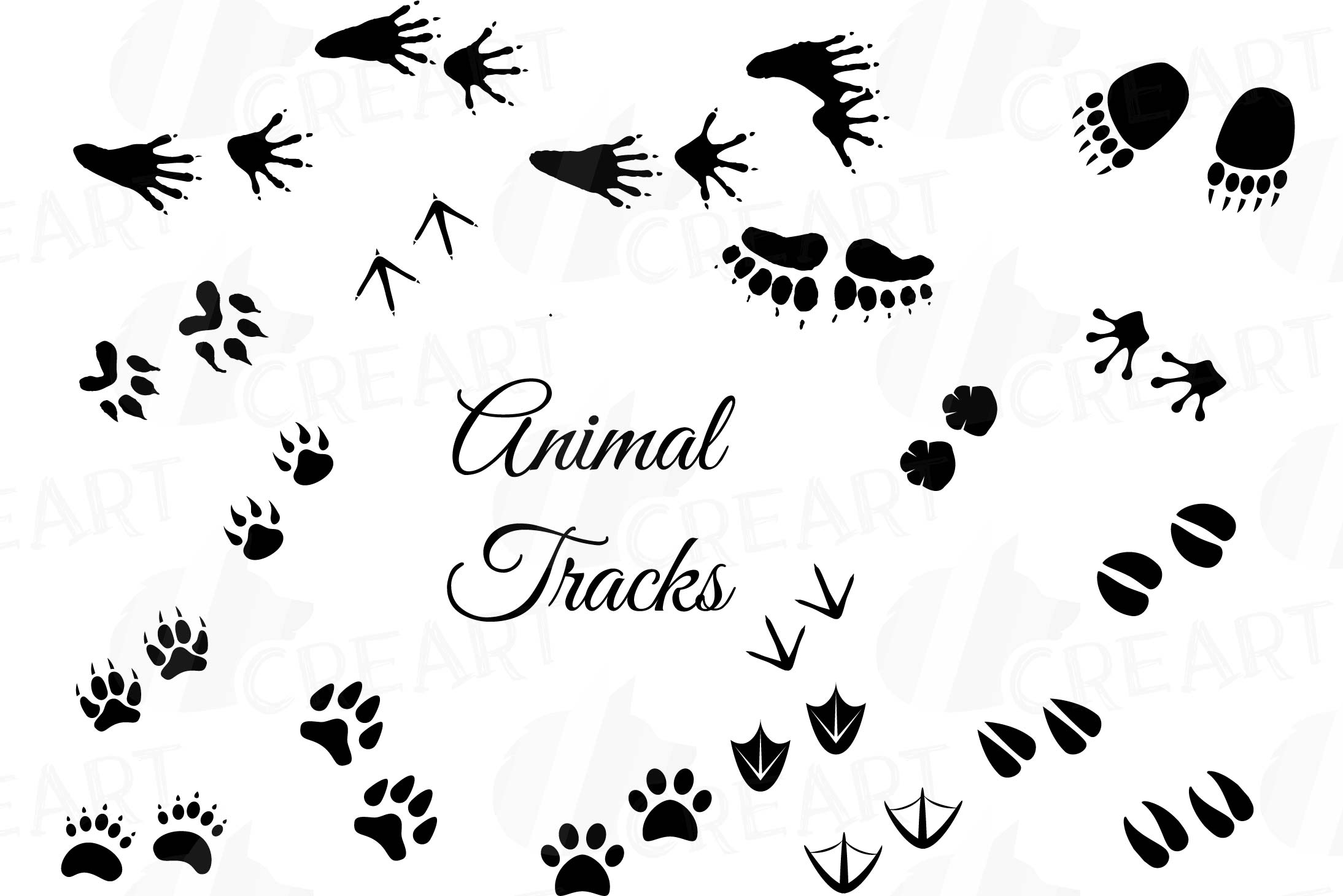 clip free library Woodland animals footprints pack. Animal tracks clipart