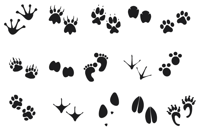 banner freeuse download Free cliparts download clip. Animal tracks clipart