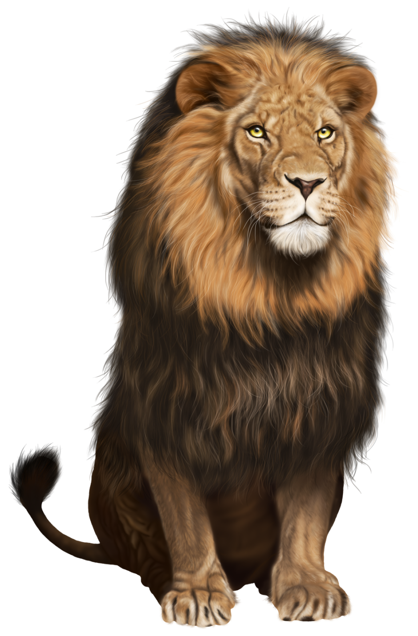 graphic black and white library Image png clip art. Transparent lion