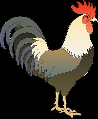 clip royalty free download Animals clipart rooster. Hane pik hanen vandhane.