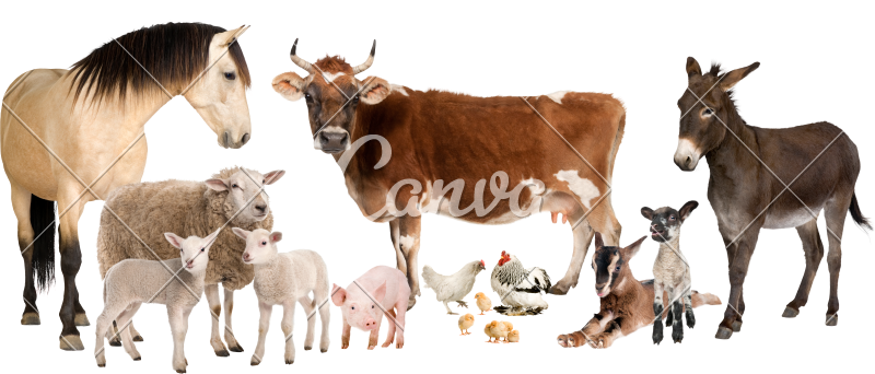 clipart transparent stock Group of Farm Animals