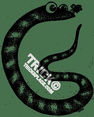 clip art free download D at getdrawings com. Drawing snake pencil