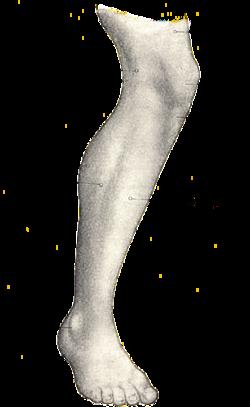 black and white stock Human leg