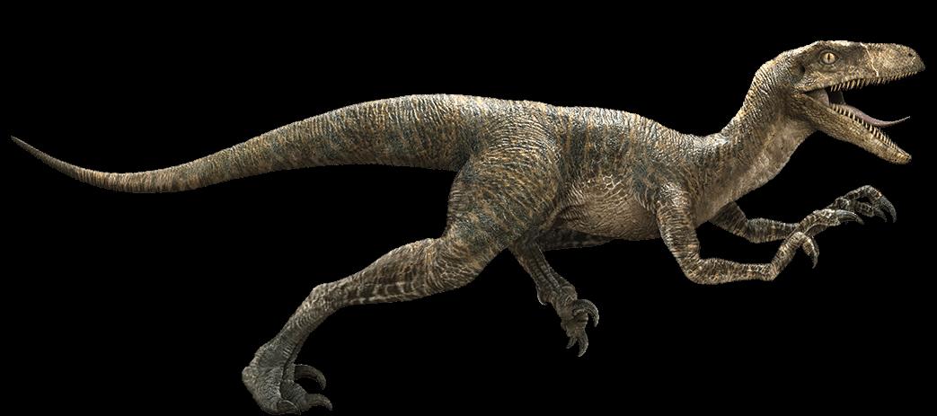 banner freeuse download Velociraptor