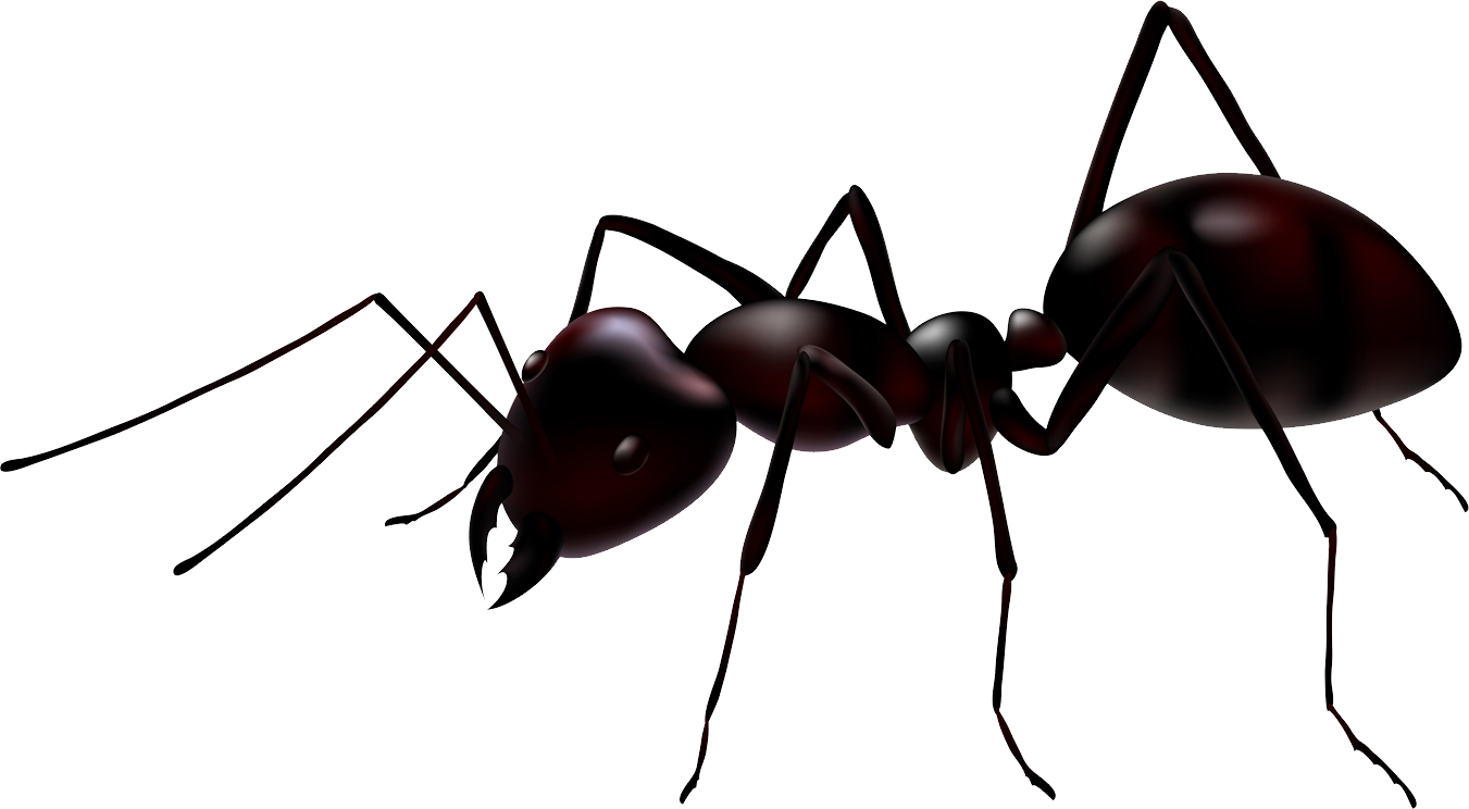 picture stock Ant clipart. Transparent background free on