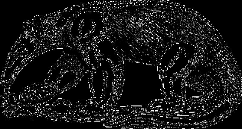clip black and white anteater