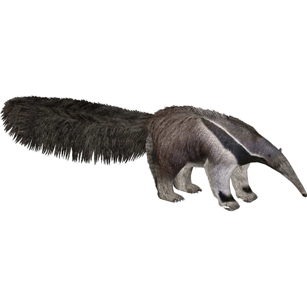 banner free library Giant Anteater