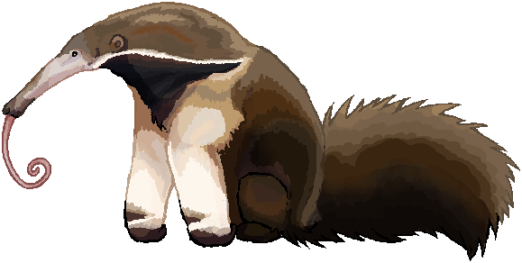 image free library Anteater Drawing at GetDrawings