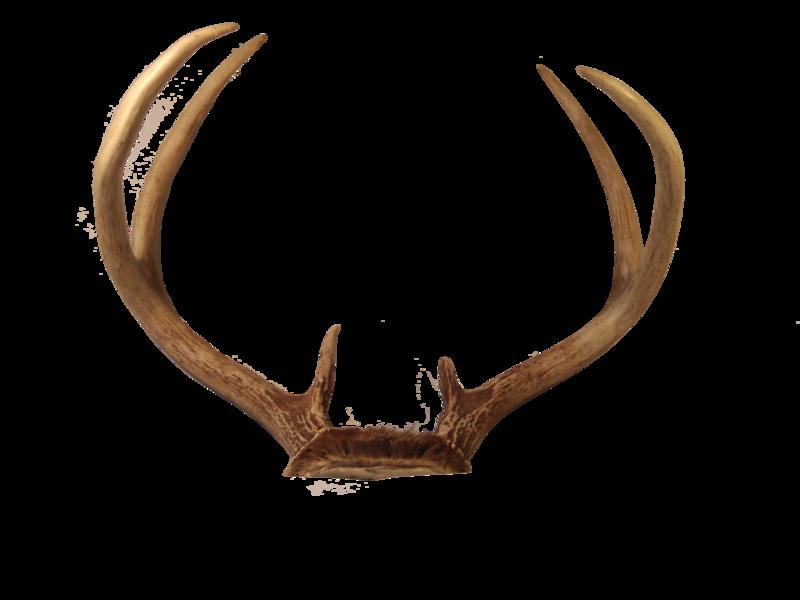 clip art transparent download Reindeer antlers png images. Ear transparent deer