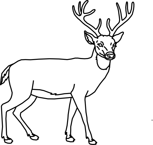 picture library stock Dear Clipart small deer