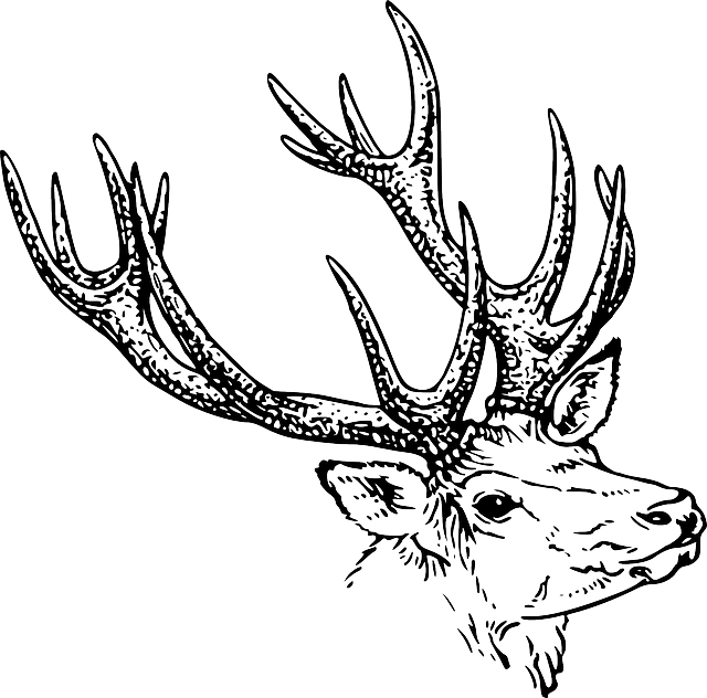 vector stock Free Image on Pixabay