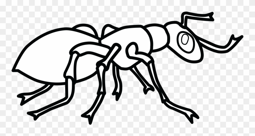 banner Ants clipart black and white. Free of an ant