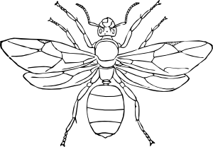 free Clip art at clker. Ants clipart queen ant
