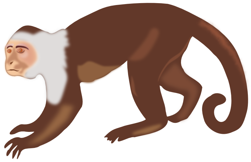 svg stock Monkey at getdrawings com. Ape clipart body