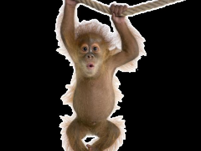 image stock Ape clipart chango. X free clip art