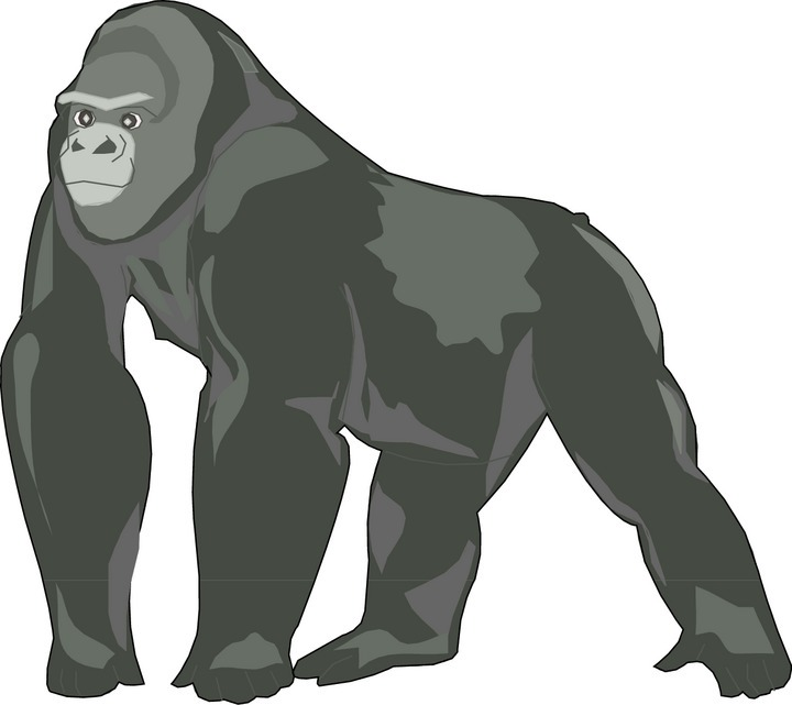 png free stock Free download on webstockreview. Ape clipart gorilla