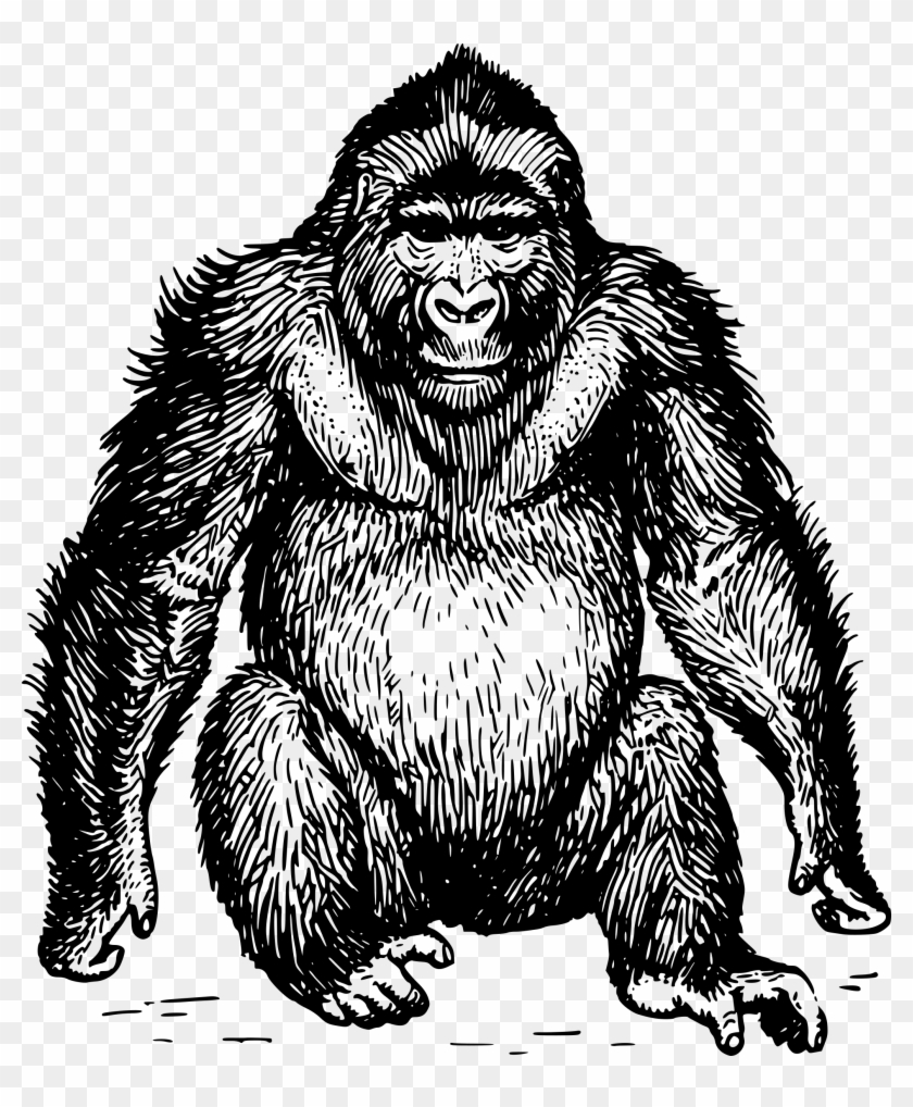 graphic royalty free library Clip art free hd. Ape clipart gorilla head