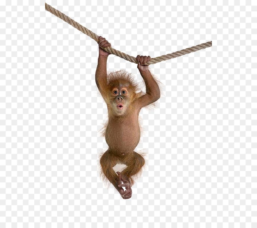clip freeuse library Monkey clip art monkeys. Ape clipart macaque.