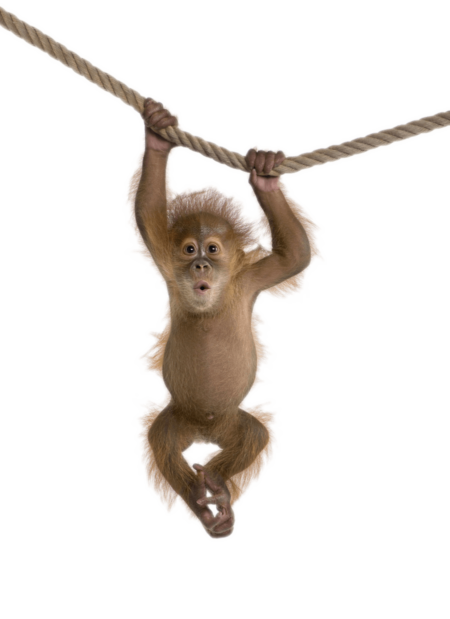 png freeuse download Monkey on rope transparent. Ape clipart macaque