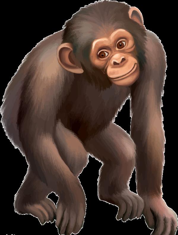clipart library Ape clipart mammal. Singes clip art animals