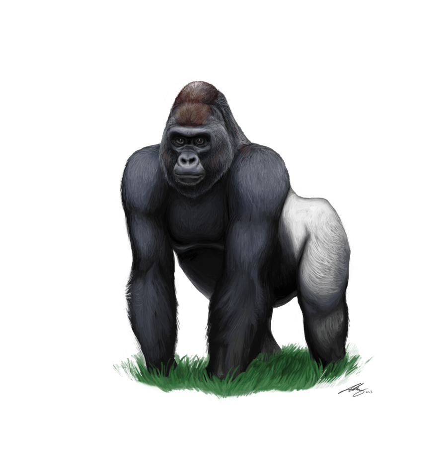 clipart royalty free stock Ape clipart mountain gorilla. Clip art cartoon transprent