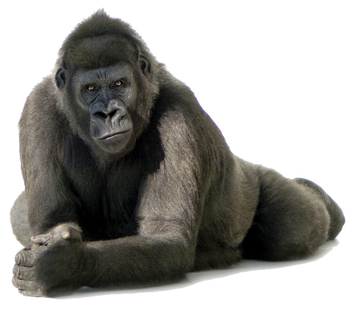 picture library Sticker by silver bullet. Ape clipart mountain gorilla