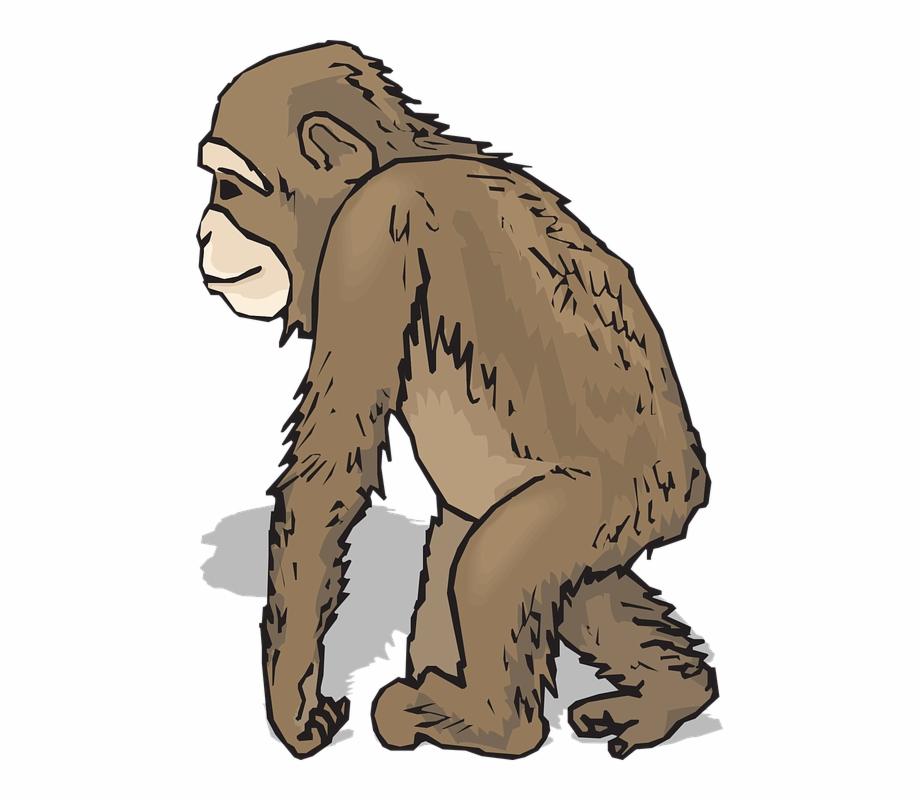 jpg transparent library Monkey clip art pngtube. Ape clipart realistic