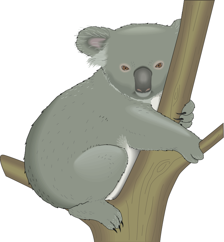 vector library library Koala animal pictures royalty. Ape clipart realistic.