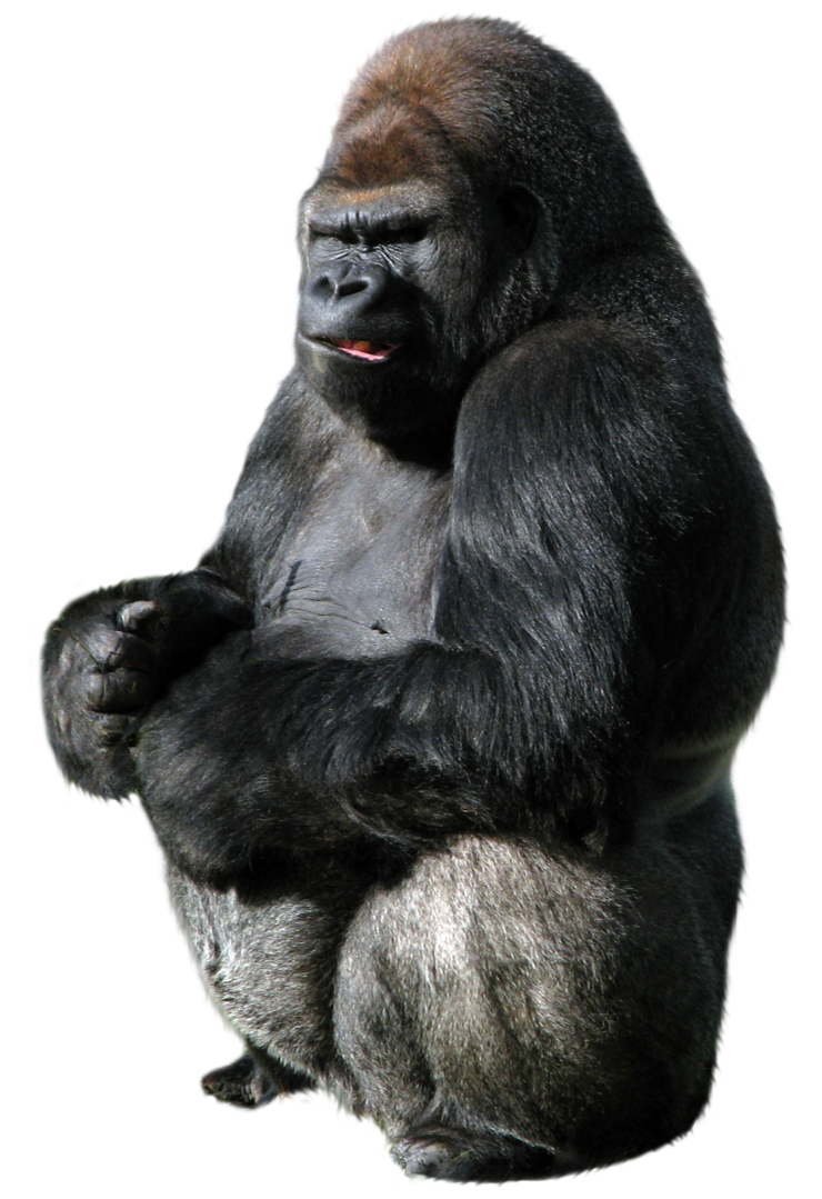 vector library stock Png images free download. Ape clipart silverback gorilla.