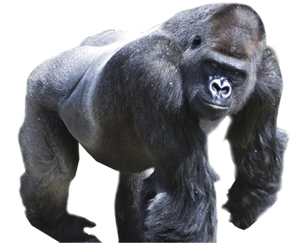 vector black and white stock Png picture materials samples. Ape clipart silverback gorilla.