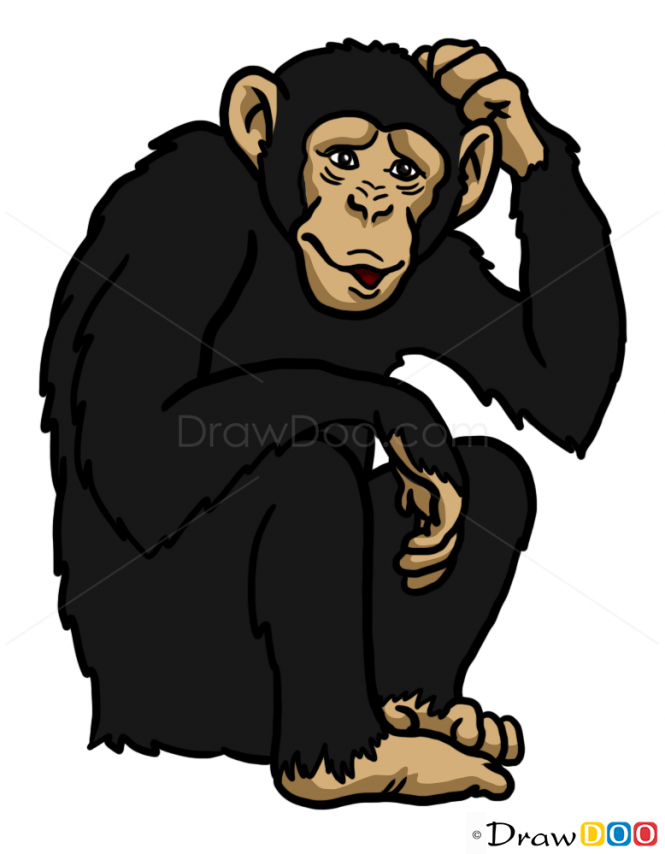 banner transparent download How to draw animals. Ape clipart wild monkey