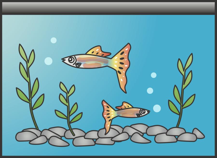 transparent download Aquarium clipart. Fish cartoon art illustration.