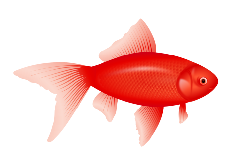 clip art stock Isolated stock photo by. Aquarium clipart six fish