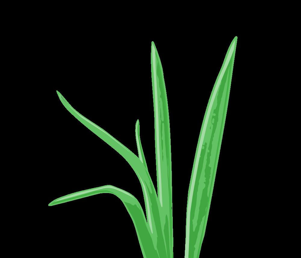 clip art Tropical Grass Aquarium Plant