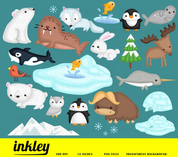vector freeuse download Arctic animal clipart. Clip art png penguin