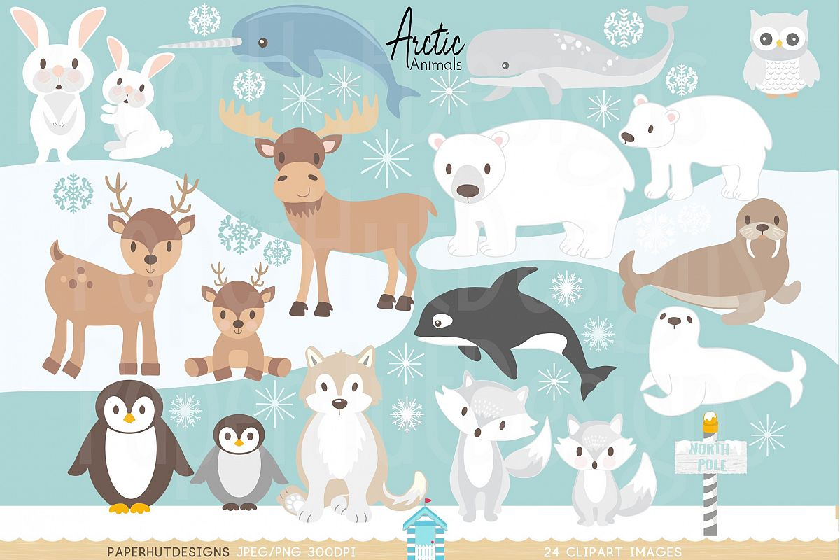 clip royalty free library Animals . Arctic animal clipart