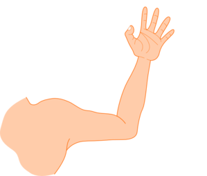 jpg transparent stock Right Arm Clipart