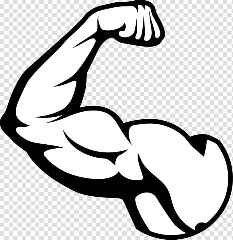 graphic download Biceps illustration muscle transparent. Arm muscles clipart.