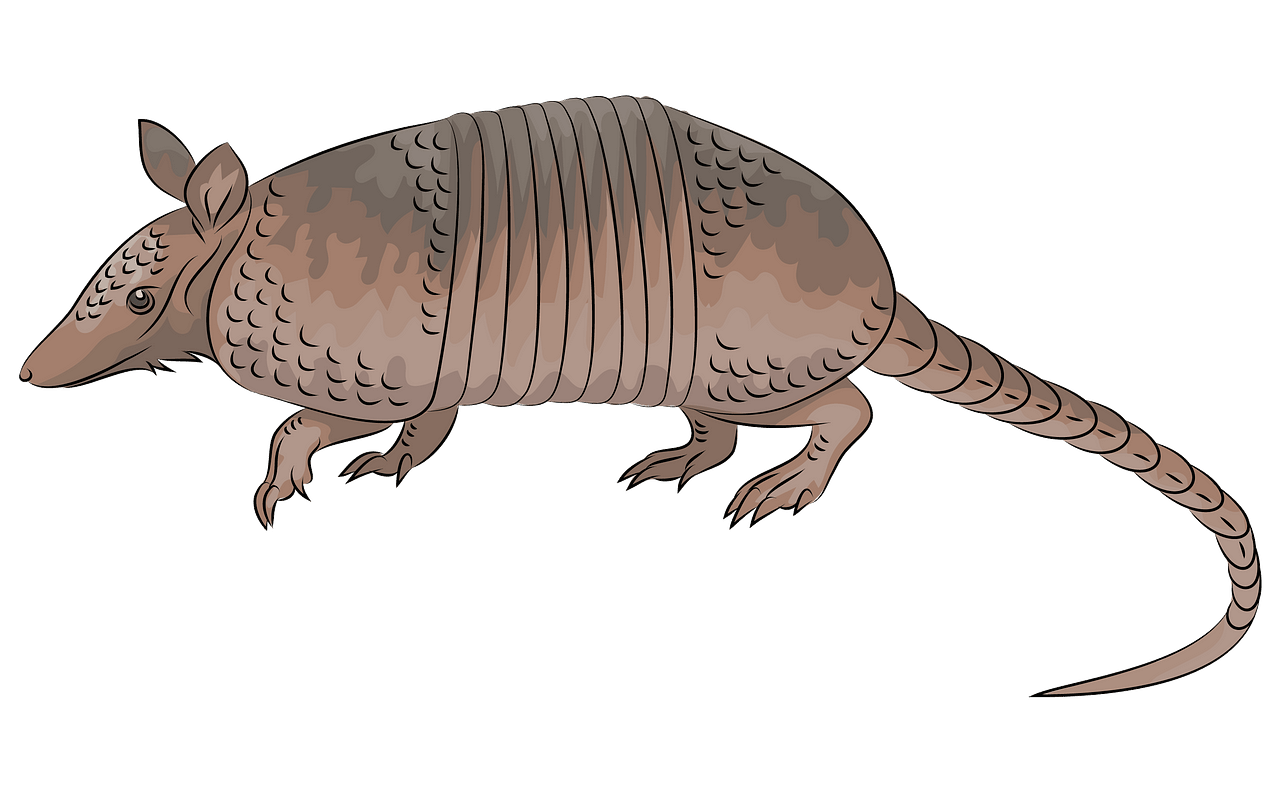 clip art library library Nine banded free download. Armadillo clipart.