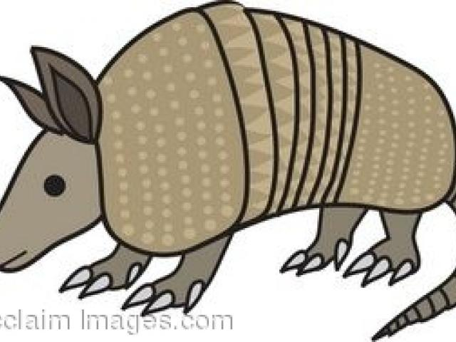 jpg free library Armadillo clipart animated. Free download clip art